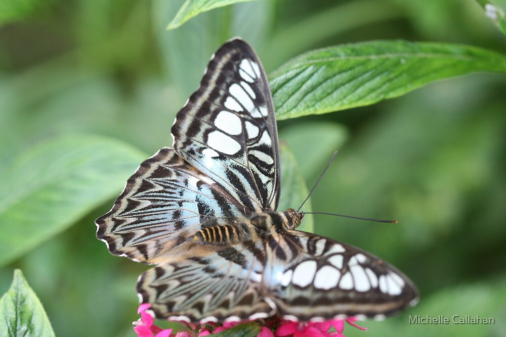 Blue and White Butterfly by Michelle Callahan