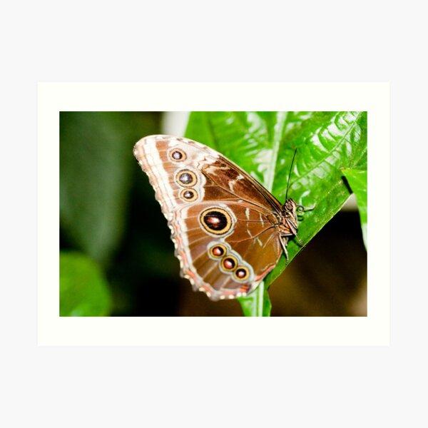 Beautiful Brown Butterfly Art Print
