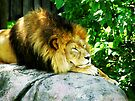 King of the Jungle  by Marcia Rubin