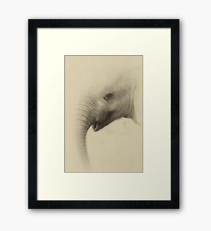 Baby Elephant Portrait Framed Print