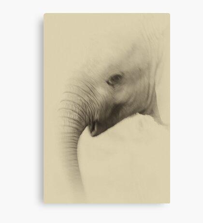 Baby Elephant Portrait Canvas Print