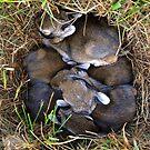 Thumper & Friends ! by Jan Siemucha
