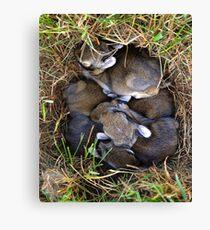Thumper & Friends ! Canvas Print