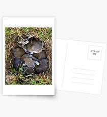 Thumper & Friends ! Postcards