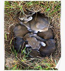 Thumper & Friends ! Poster