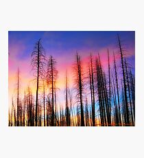 Whispering Pines Photographic Print