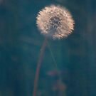 Diffuse Dandelion by DExPIX