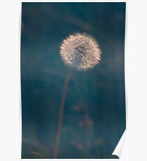 Diffuse Dandelion Poster