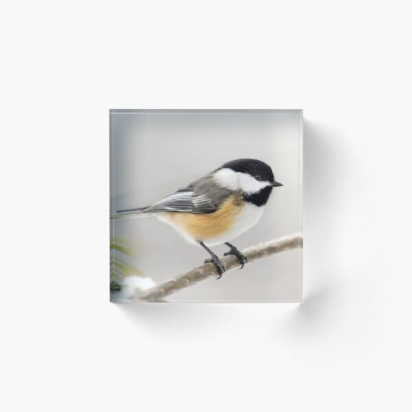 Chickadee Bird Painting Acrylic Block