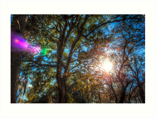 The Light in the Trees by Kelushan
