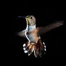 Gulf Island Humming Bird by toby snelgrove  IPA