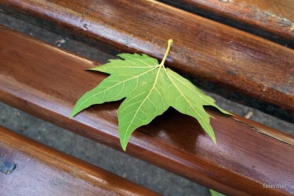 fallen leaf by feiermar