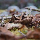 Fallen Leaf. by WessexBoy