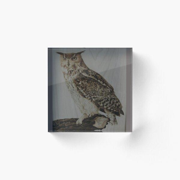 Eurasian Eagle Owl pyrography artwork Acrylic Block