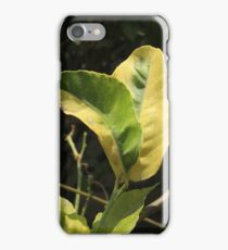 Leaves on a Tree iPhone Case/Skin