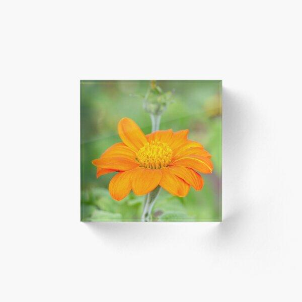 Mexican Sunflower Acrylic Block