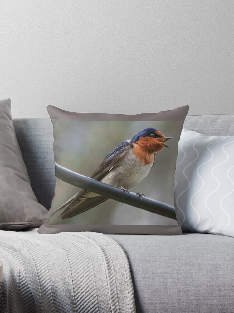 welcome swallow by shotbysas .