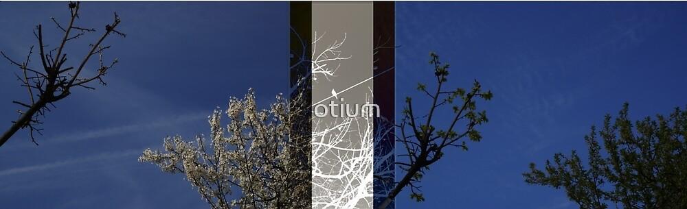 morning bird by otium