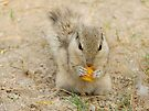 Squirrel with a tooth for fries by Ravi Chandra