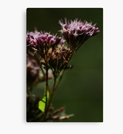 Wild flower of forest 2 Canvas Print