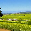 Swartland Canola by Pieta Pieterse