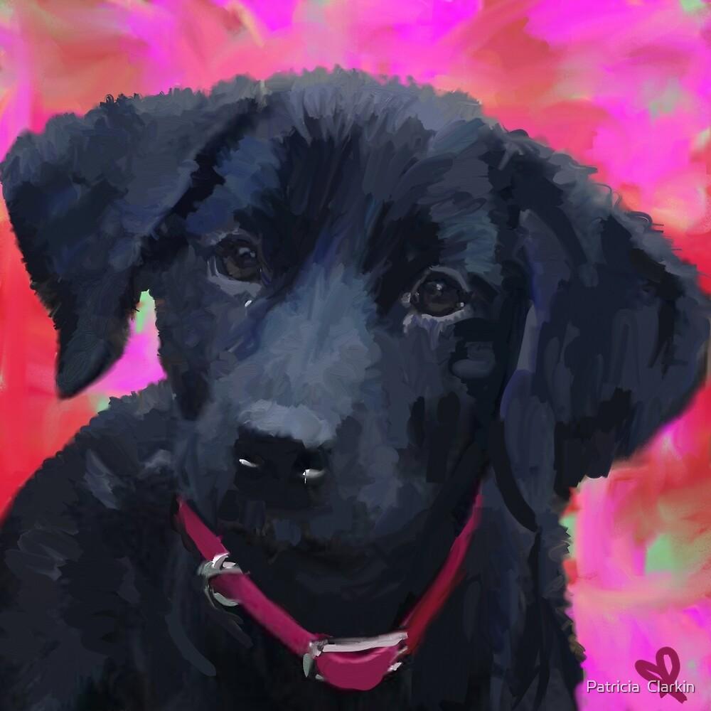 Roxy Love by Trisha Clarkin