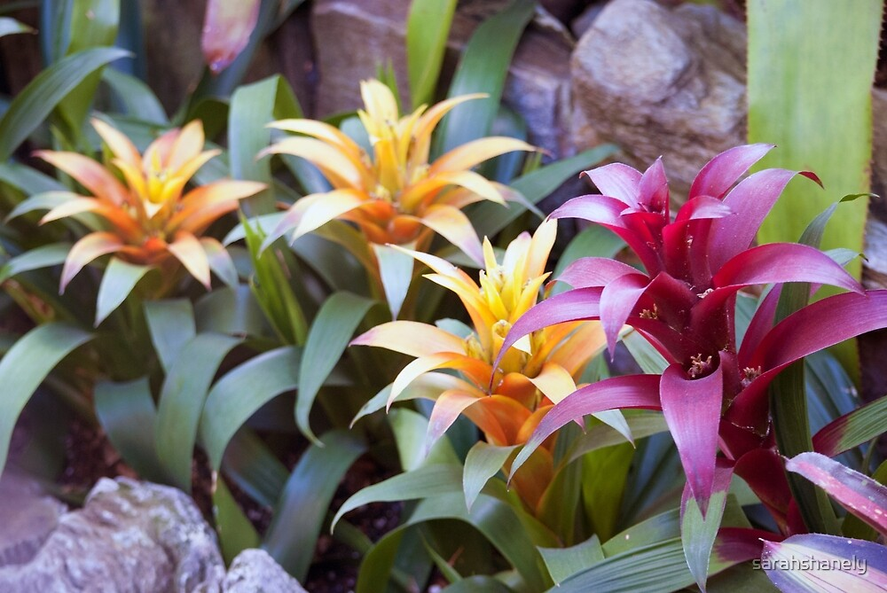 Longwood Gardens - Spring Series 70 by sarahshanely