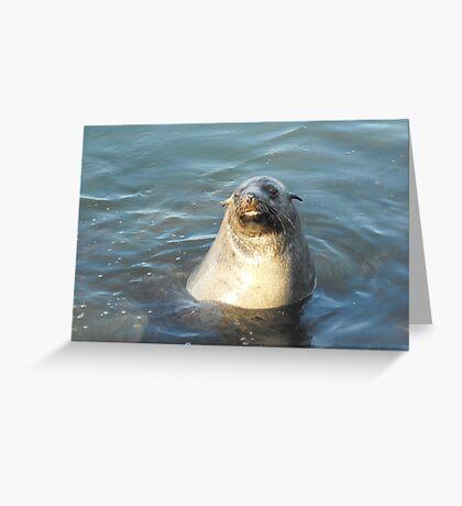 Australian Fur Seal Greeting Card