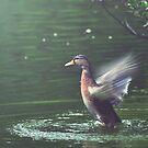 Bird in Flight at the Manx Arboretum by Sammie Caine