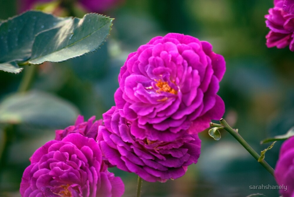 Longwood Gardens - Spring Series 76 by sarahshanely