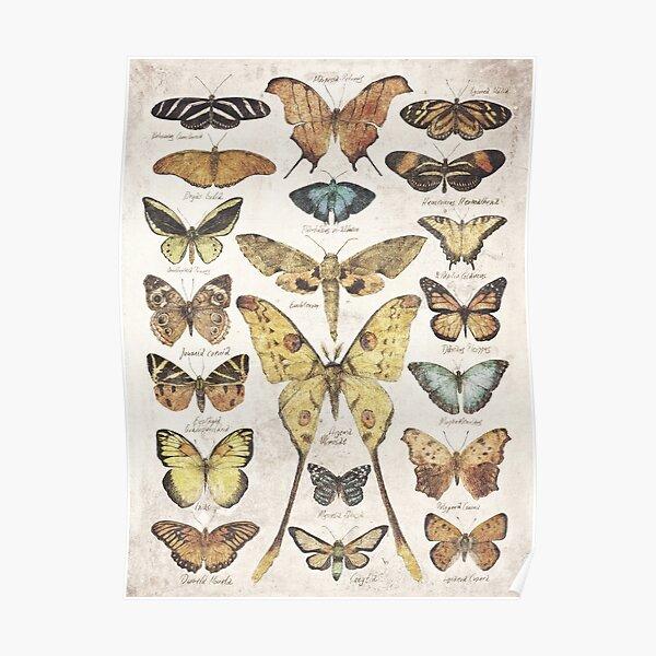Butterflies and Moths Poster