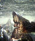 Fish Tales by Corri Gryting Gutzman