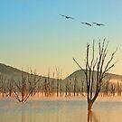 Mist on Moogerah  by Beth  Wode