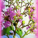Crape Myrtles by Wanda Raines