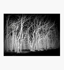 Skeleton Tree's Photographic Print
