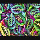 """""""Blending In"""" by kcd-designs"""