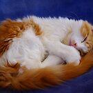 Sleepy Kitty by Jessica Hooper