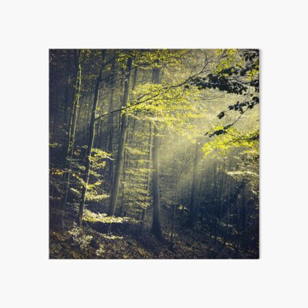 Being There - Morning Light in Forest Art Board Print