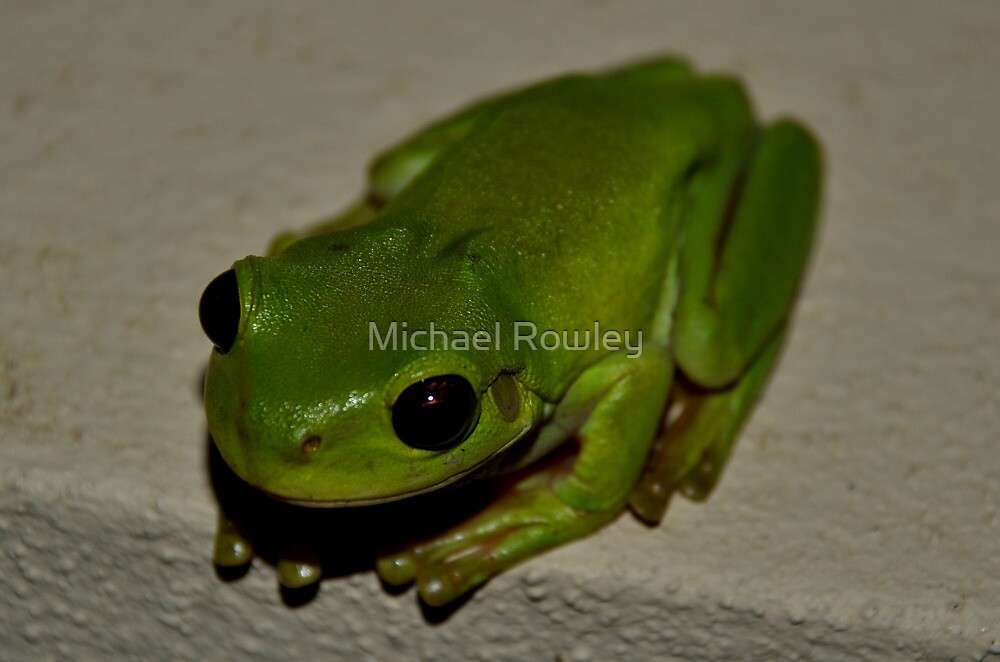 Kermit  by Michael Rowley