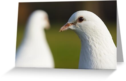 Doves by shaftinaction