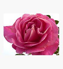 The Rose of Ramelton Photographic Print
