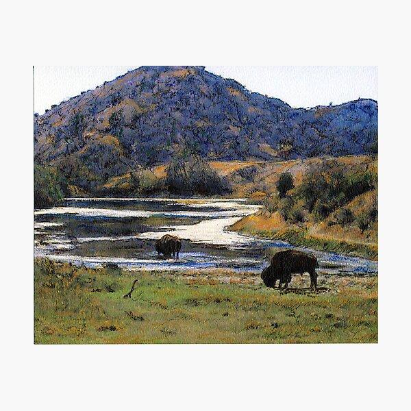 Catalina Buffalo Photographic Print