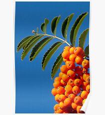Orange tabs Poster