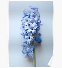 Pastel Blue  Poster