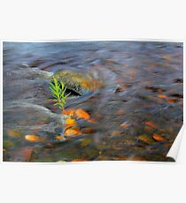 River Tees Willow Weeping Poster