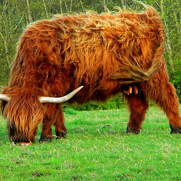 Highland Beastie Mother by whirl