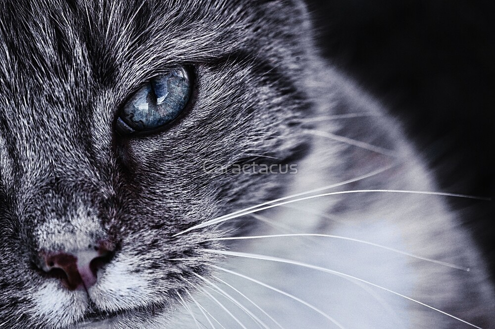 Cat's Eye by Caractacus