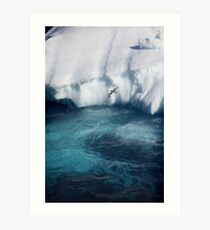 Antarctic bird Art Print
