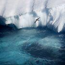 Antarctic bird by Robyn Lakeman