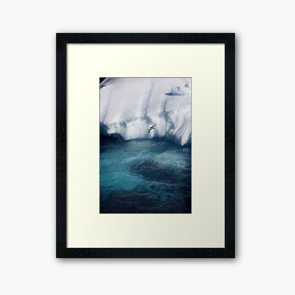Antarctic bird Framed Art Print